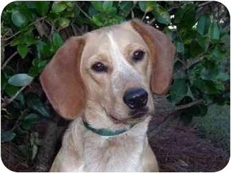 Beagle Mix Dog for adoption in Mobile, Alabama - Benson