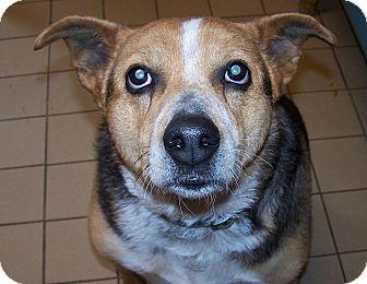 Shepherd (Unknown Type) Mix Dog for adoption in Jackson, Michigan - Sally