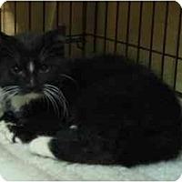 Adopt A Pet :: Jewel - Jenkintown, PA