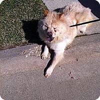 Adopt A Pet :: Annabelle - New Boston, NH