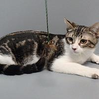 Adopt A Pet :: Nicholas - Seguin, TX