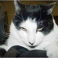 Adopt A Pet :: George - Watkinsville, GA
