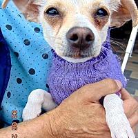 Adopt A Pet :: Dulcena - San Diego, CA