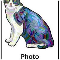 Domestic Longhair Cat for adoption in Encinitas, California - Robin & Batman (Bonded Pair)