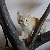 Adopt A Pet :: Bonnie - Montello, WI