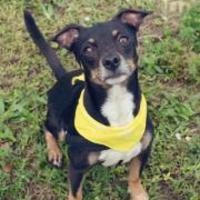Adopt A Pet :: Bubba - Loxahatchee, FL