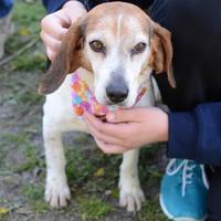 Adopt A Pet :: Yam - Ann Arbor, MI