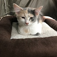 Adopt A Pet :: DE - Natasha - Blairstown, NJ