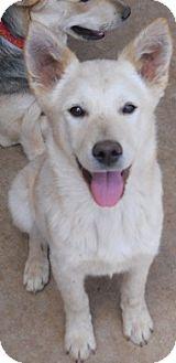 German Shepherd Dog/Husky Mix Puppy for adoption in dewey, Arizona - Jerrod