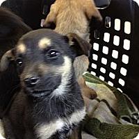 Adopt A Pet :: May - Stilwell, OK