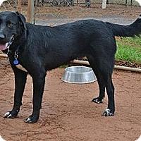Adopt A Pet :: Big Buddy - Athens, GA