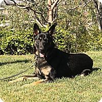 Adopt A Pet :: Jaxson - Laguna Niguel, CA
