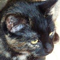 Adopt A Pet :: Callie - Salisbury, NC