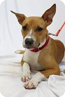 Hound (Unknown Type) Mix Dog for adoption in Bradenton, Florida - Waffles