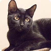 Adopt A Pet :: Jasmin - Chicago, IL