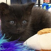 Adopt A Pet :: Samantha - Castro Valley, CA