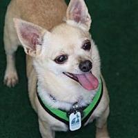 Adopt A Pet :: Kimberly - Colorado Springs, CO