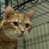 Adopt A Pet :: Kiva - Lancaster, PA