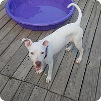 Adopt A Pet :: Kirra - Lorain, OH