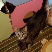 Adopt A Pet :: Ocean - Spruce Grove, AB