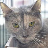 Adopt A Pet :: Petunia - Fallston, MD