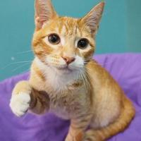 Adopt A Pet :: Sylvester - New Orleans, LA