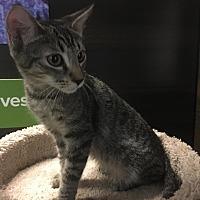 Adopt A Pet :: Stars - Winchester, CA