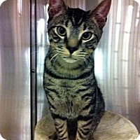 Adopt A Pet :: Maple - Warminster, PA