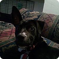 Adopt A Pet :: Maya - Jacksonville, FL