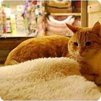 Adopt A Pet :: Lailo - Modesto, CA