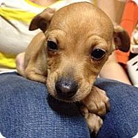 Adopt A Pet :: Anderson - Marlton, NJ