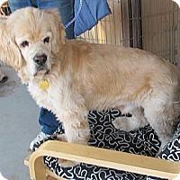 Adopt A Pet :: DARBY - Toluca Lake, CA