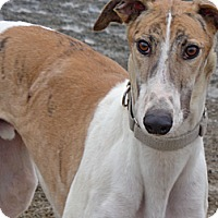Adopt A Pet :: Fry - Roanoke, VA