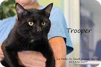 Domestic Shorthair Cat for adoption in La Porte, Indiana - Trooper