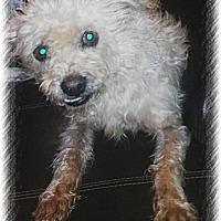 Adopt A Pet :: Chewbacca - San Bernardino, CA