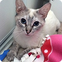 Adopt A Pet :: Elsa - Irvine, CA