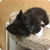 Adopt A Pet :: Mochi - Riverside, CA