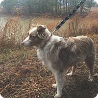 Adopt A Pet :: Buster - Dacula, GA