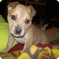 Adopt A Pet :: Daisey - Wedowee, AL