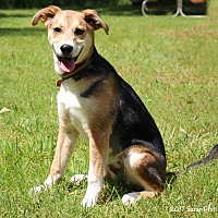 Adopt A Pet :: Willow - Bedford, VA