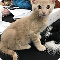 Adopt A Pet :: Harry - Walnut Creek, CA