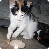 Adopt A Pet :: DIXIE - Harmony, NC