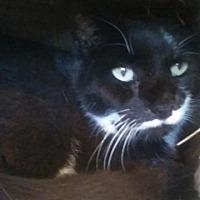 Adopt A Pet :: Oreo - Freeport, NY