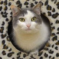 Adopt A Pet :: Lola - Cooperstown, NY