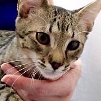 Adopt A Pet :: Keegan - Davis, CA