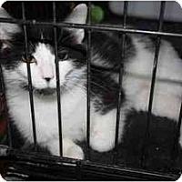 Adopt A Pet :: Nala - Owasso, OK