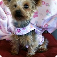 Adopt A Pet :: Lily - Fremont, CA