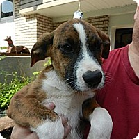 Adopt A Pet :: Thelma - South Jersey, NJ