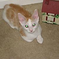 Adopt A Pet :: Buster - Ortonville, MI