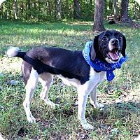 Adopt A Pet :: Rita - Mocksville, NC